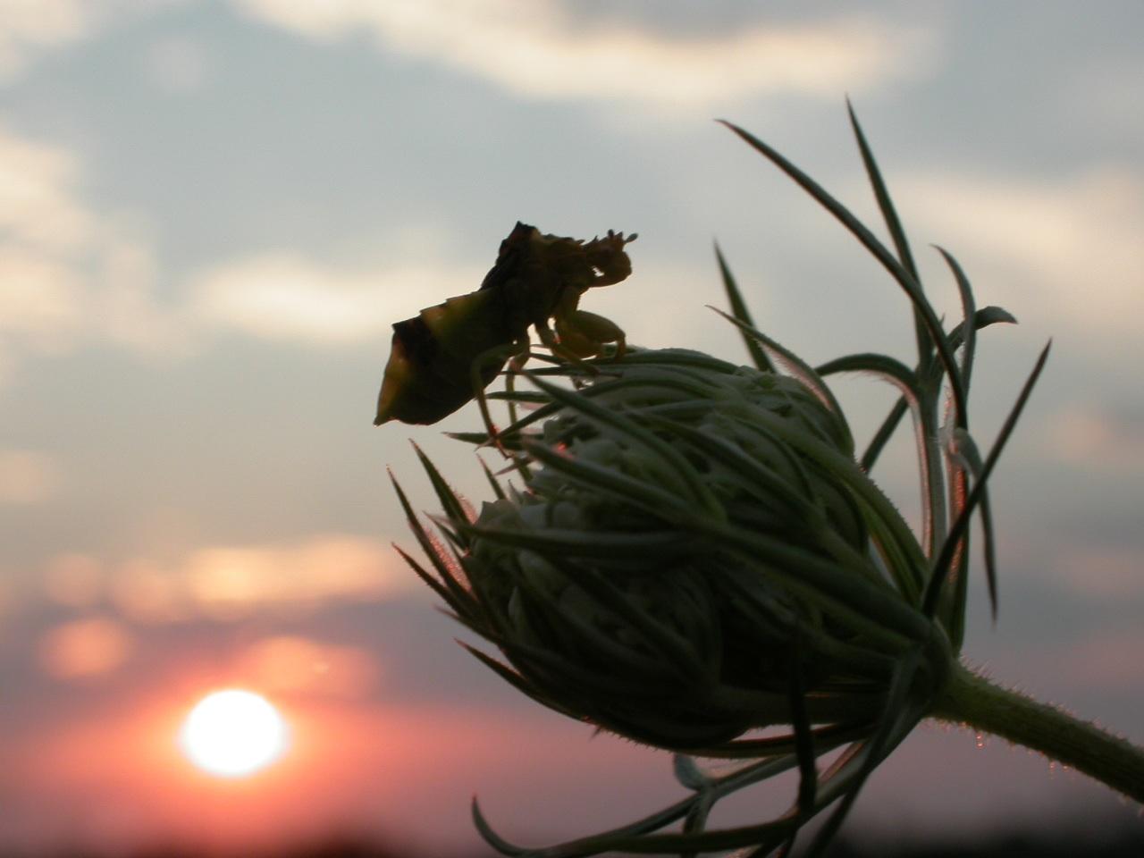 ab_sunset4